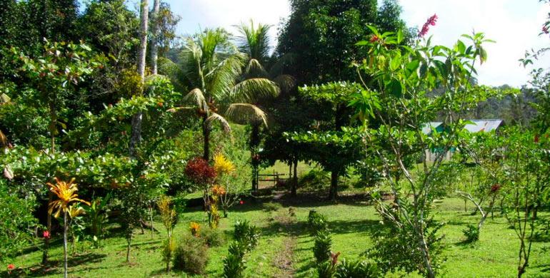Viaje A La Merced, Ciudad Cafetalera Del Perú, Jardin El Perezoso