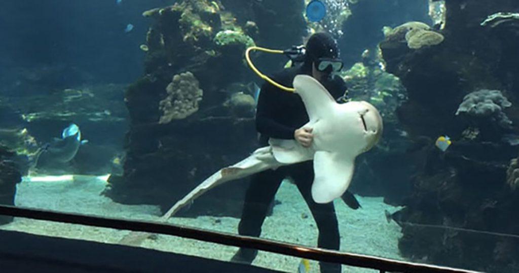 Viajando A Numea Capital De Nueva Caledonia, Aquarium Des Lagons Nobelle Caledonie