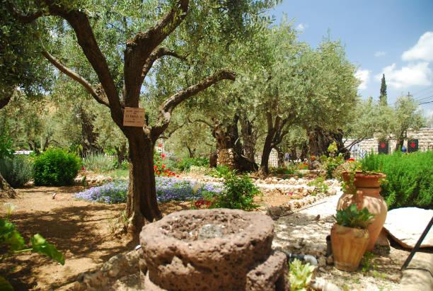Tierra Santa de Jerusalén, Beatas Tierras De Israel, Huerto de Getsemaní