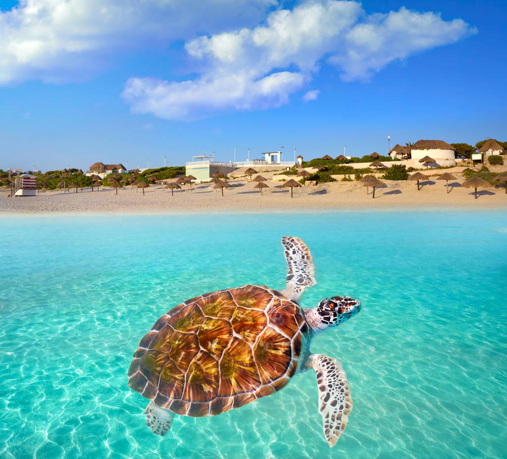 Conoce las Mejores Playas Públicas en Cancún.